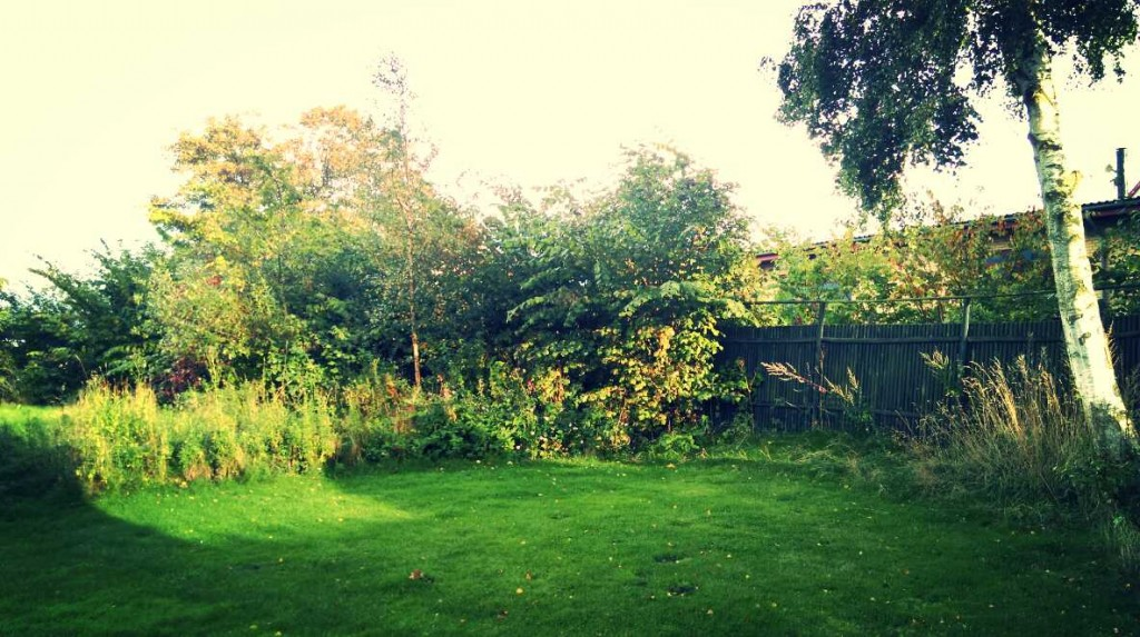 Rabarbergården, sol på græsset