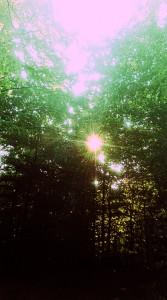 der-skoven-stod-saa-smuk1