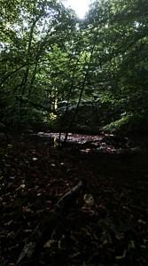 der-skoven-stod-saa-smuk2